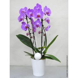 Compositions florales, Plantes et Fleurs pour les FÊTES