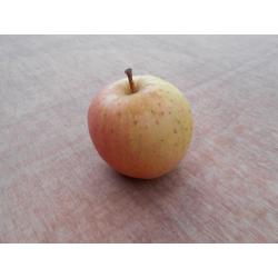 pommes bio toutes variétés de 5kg à 9.99kg